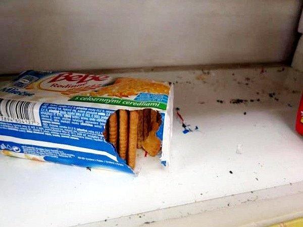 Myši si v prodejně pochutnávaly i na sušenkách.