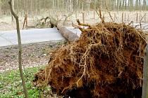 Strom spadlý přes vozovku u Libčan.