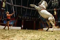 Cirkus Humberto - Ilustrační fotografie.