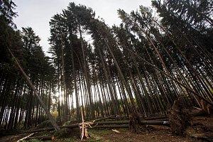 Hasiči zasahují u desítek případů popadaných stromů