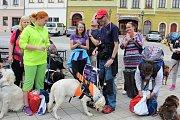 Mistrovství České republiky vodicích psů v Hradci Králové.
