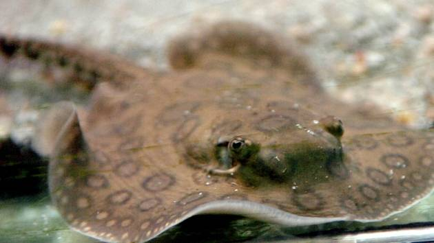 Malí rejnoci v Obřím akváriu v Hradci Králové.