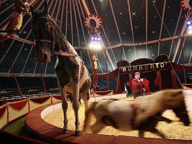 Cirkus Humberto - ilustrační foto.