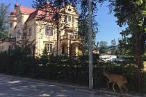 Spolek MAS Krkonoše pomůže vybudovat nové chodníky.