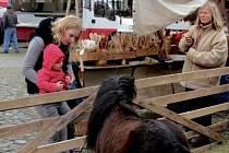 Hospodářská zvířata na farmářských trzích na Malém náměstí v Hradci Králové.