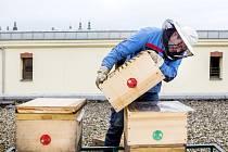 Instalace včelích úlů na střeše hradeckého Divadla Drak.