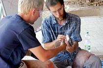 Výroba pravěkého nástroje z kamené zvaného pazourek v archeoparku ve Všestarech.