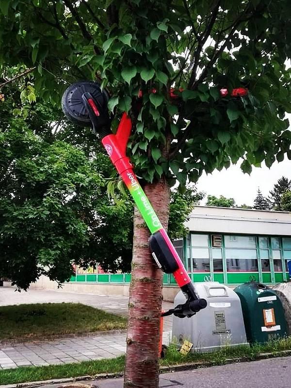 V Malšovicích se koloběžky objevily v korunách stromů.