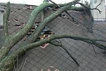 Pád stromu na střechu rodinného domu v Olešnici v Orlických horách