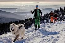 Skialpinisté se psy na krkonošských hřebenech.