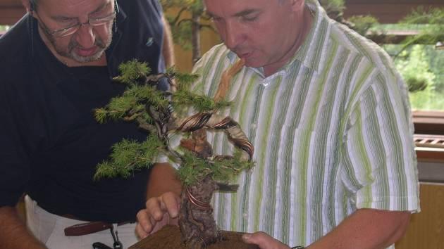 Úprava bonsají