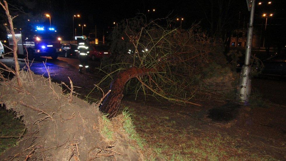 Likvidace spadlého stromu v hradecké Brožíkově ulici.