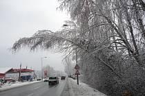 Pád stromu komplikoval dopravu na výjezdu z Hradce Králové směrem na Kolibu.