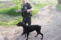 Strážníky odchycený pes.