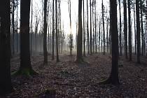 Les poblíž místa nálezu