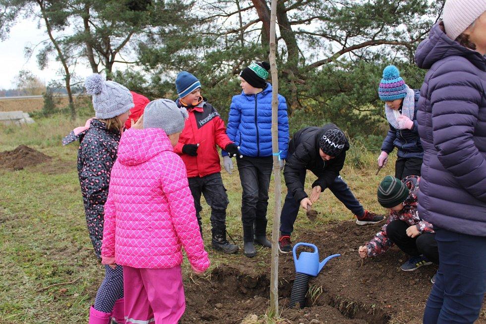Další stromy vysadili v Drmoule.