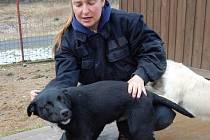 Psi z chebského psího útulku v Horní Hraničné Kříženec Deryk, pes, starý asi 5 měsíců. Hravé štěně,které potřebuje výchovu.