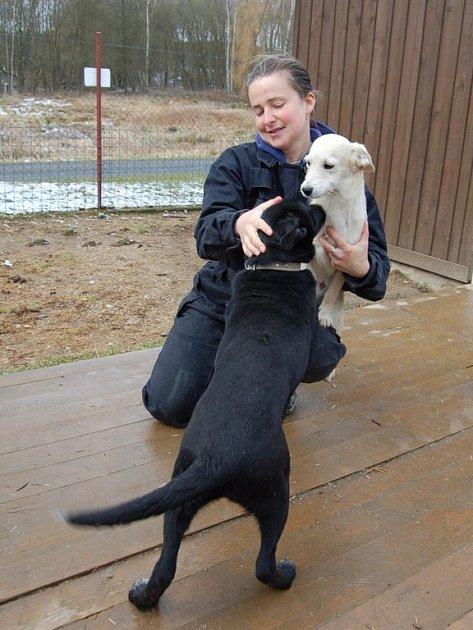 Psi z chebského psího útulku v Horní Hraničné Kříženec Mili, pes, starý asi 8 měsíců. Hravé štěně, které potřebuje výchovu.