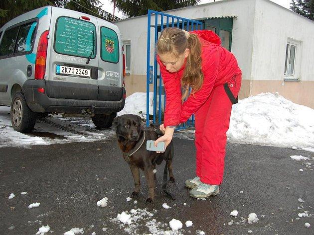 Psi v útulku mají už nové čipy a pracovníci útulku disponují čtečkou značky Trovan. Které čipy čte, když se Trovany chebští psi nečipují, je záhadou