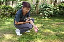 Chráněný prstnatec májový vyrostl z ničeho nic na zahrádce Zdeňce Křížové. Ta bydlí v jedné z vesnic na Tepelsku