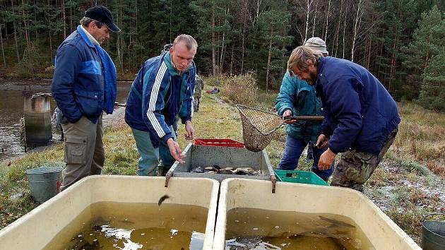TŘÍDILI RYBY. Skalenští rybáři vylovili z rybníka u lesa celkem 1450 k aprů, 130 amurů a 400 línů.