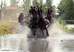 Nebanické závody  představují zajímavou alternativu pro strávení prázdninového víkendu nejen pro znalce koní, ale vzhledem k nedaleké cyklostezce i pro milovníky cykloturistiky či rodiny s dětmi.