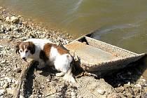 Po vypuštění vody z přehradní nádrže Skalka v Chebu se na odkrytých březích válí nepořádek.