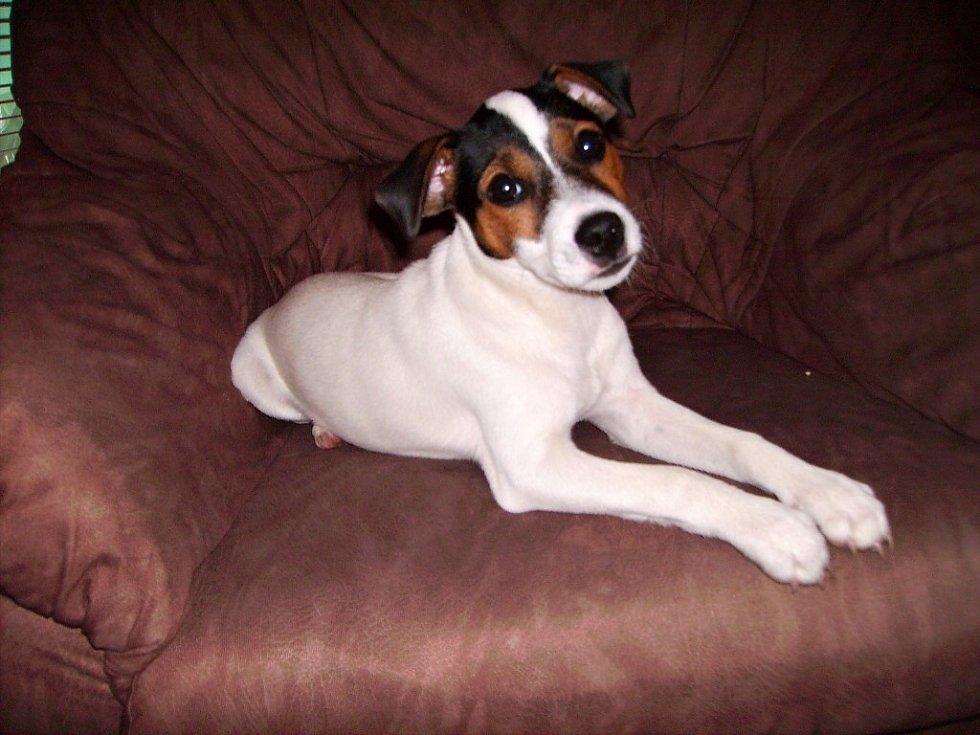 Tento pes se jmenuje Skip. Já jsem největší miláček a rozmazlánek rodiny.