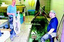 USMĚVAVÍ rybáři Libor Motyčka a Radomír Duchaj (zleva) ukazovali fotografovi lipany, které Český svaz rybářů Aš vysazoval do Ašského potoka a Bílého Halštrova.