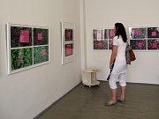 Obrazy, grafiky, plastiky a fotografie. To vše je od čtvrtka k vidění ve františkolázeňské galerii Brömse.