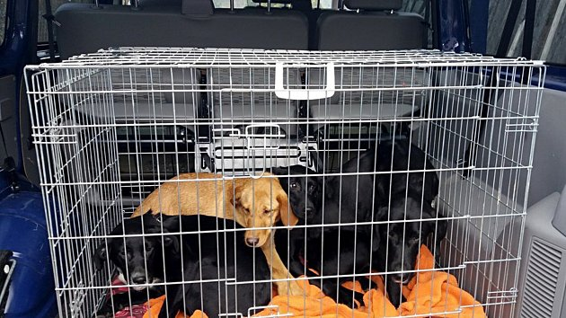 Týraná štěňata z Aše se podařilo zachránit. Nyní budou čekat na nové páníčky.