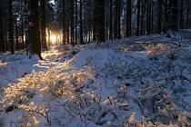 V noci na první svátek vánoční napadlo na Dyleni a Lesném a dalších výše položených místech v okolí Mariánských Lázní až 10 cm nového sněhu.