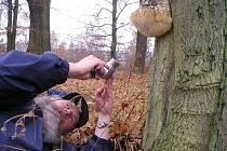 BEZ MOBILNÍHO TELEFONU a fotoaparátu nevyráží do lesa ani zkušený chebský houbař Pavel Syřiště.