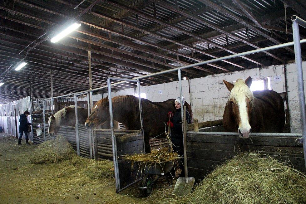 Eva Klestilová se stará o patnáct koní.