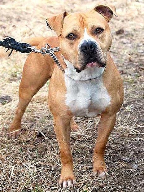 VYPUŠTĚNÝCH psů přibývá, chebský útulek v Horní Hraničné je plný neumístitelných zvířat.