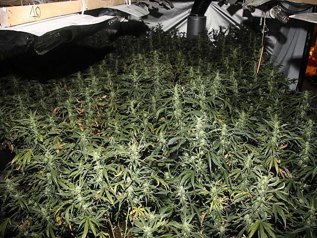 Pěstírna marihuany v Hradišti u Chebu.