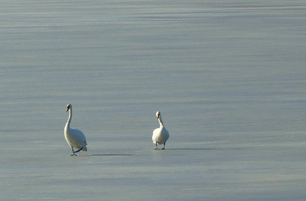 Procházka na Velkém rybníku