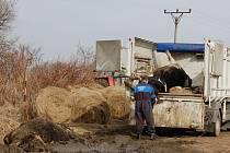 Odstraňování mrtvých krav z pastviny u Horních Dvorů na Chebsku