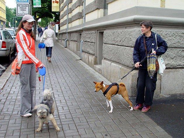 Někteří majitelé psů z Chebu jsou už na novou vyhlášku připraveni