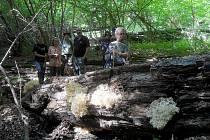 ÚČASTNÍCI AKCE MAPOVÁNÍ HUB na Mariánskolázeňsku obdivovali také vzácné korálovce  bukové.