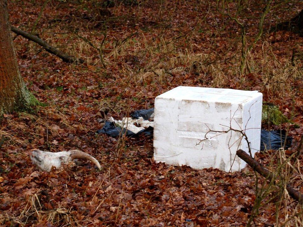Zbytky koz byly uloženy v polystyrenových krabicích
