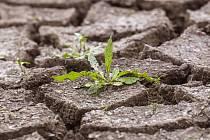 I přes malé množství sněhu je zatím vláhy v půdě dostatek. Až teprve jarní měsíce rozhodnou o tom, jestli mají lidé počítat se suchem, anebo ne.
