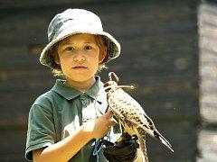 Sokolnický den patří mezi oblíbené akce v přírodní rezervaci SOOS.