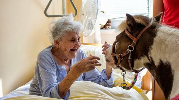 Hipoterapie je metoda, která se využívá u lidí s různými neurofyziologickými a psychomotorickými poruchami.