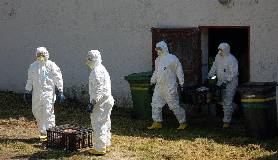 NÁKAZA PTAČÍ CHŘIPKOU, to bylo námětem taktického několikadenního cvičení FOCUS 2015. Akce vyvrcholila na farmě v Plesné, kde bylo cvičení obětováno sto padesát slepic.