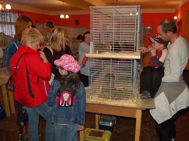 Přes devadesát morčat se v celé své kráse ukázalo na výstavě v Hájích u Chebu. Podívat se na ně přišlo několik desítek lidí.