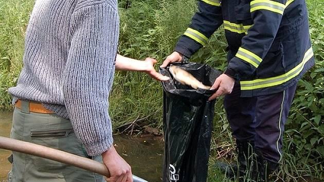 Plesenští rybáři a dobrovolní hasiči sbírali v Plesenském potoce uhynulé ryby