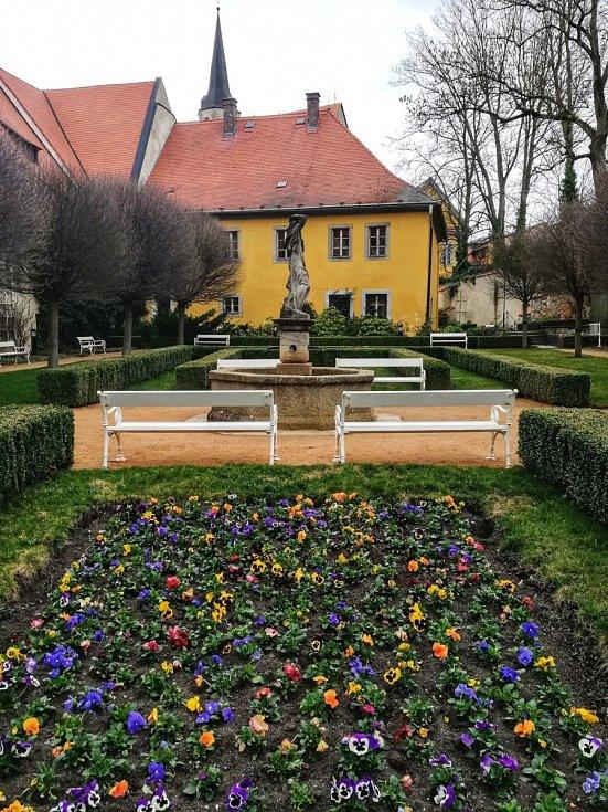 Macešky už vykvetly v chebské klášterní zahradě. Ta patří k nejnavštěvovanějším místům v Chebu.