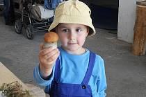 LONI SE AKCE MILOVNÍKŮ PŘÍRODY na Dyleni účastnil i malý houbař Martínek z Bečova.  Na snímku obdivuje krásného křemenáče.