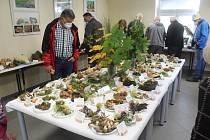 Výstava v Mariánských Lázních představuje v sobotu a v neděli 250 druhů hub.
